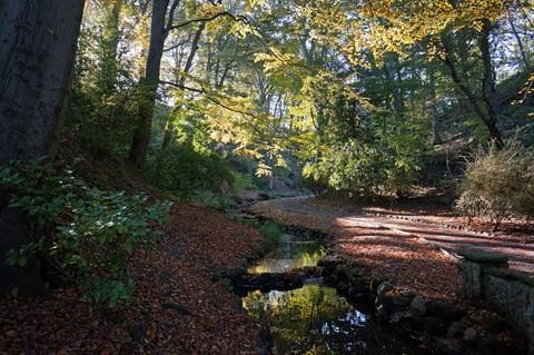 Autumn Glen