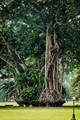 Taman Bogor botanical garden, Indonesia