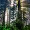 Del Norte Redwoods Pano 02-2