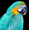 parrot_7431