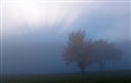 Rays behind Trees