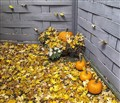 Pumpkins Among the Leaves