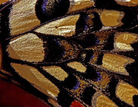 Mosaic .