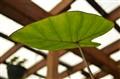greenhouse 037