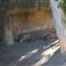 Komodo dragon Sydney