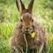 Too Cute Bunny_