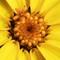 Yellow Flower 1-2