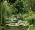 Monet's Pond In Giverny