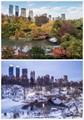 Central Park Pond - Autumn & Winter