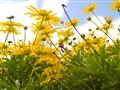 Ups-a-daisy