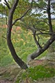 tress...Wildcat Mound