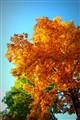 Free leaves