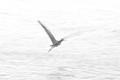 Heron Gone
