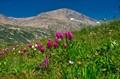 Mt Democrat Colorado