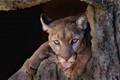 A Puma's Opinion