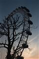 DSC_1850 Eye Tree