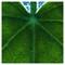 leaf, fluo overlay: