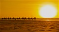 Sunset camels Broome