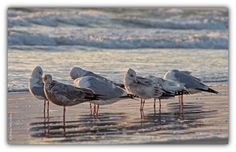 Tranquil gulls on the beach at sunrise
