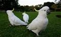 3 parrots.