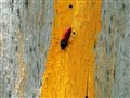 red bug on the yellow arrow