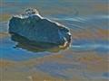 oily tide