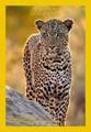 The wildlife of Timbavati