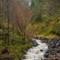 forest waterfall near Plockton