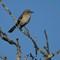 mock bird crop only 12-16-13 199 (1 of 1)