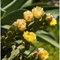 Cactus flowers_P5177582-Edit copy