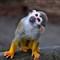 photo wildlife 28th dec 09 142