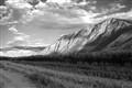Landscape in Monotone
