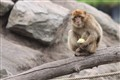Monkey with apple 2