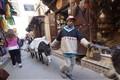 Medino of Rabat