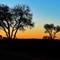 SA_June16_797_Kruger Park