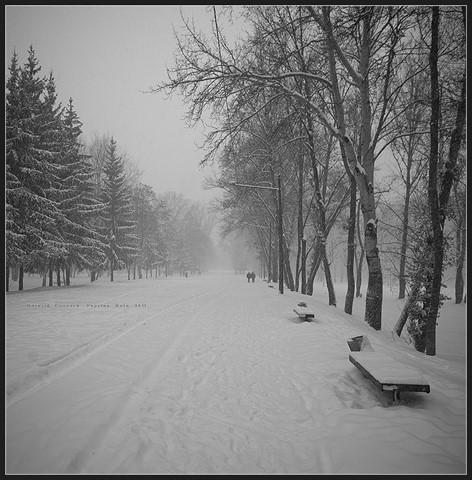 Snowfall ... Evening ...