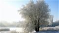 rime tree