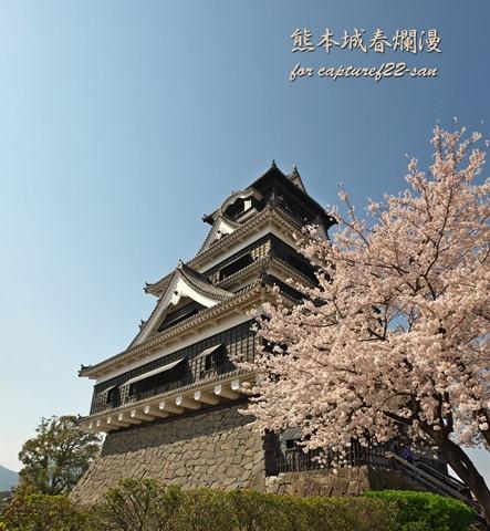 熊本城桜06panoDPR