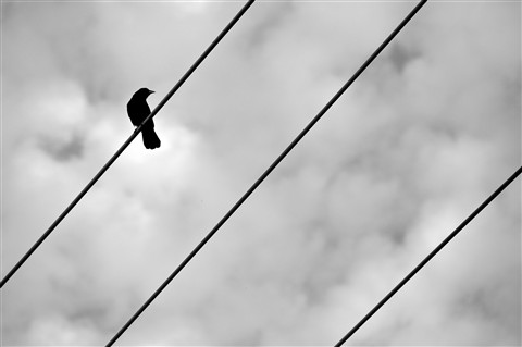 Bird On A Wire (4 of 4)