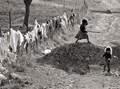 Clothesline on a Fence.... Jan 1980