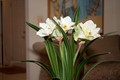 artificial-flowers20150622