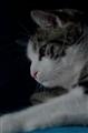 Thoughtfull Cat