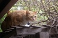 Athena birding