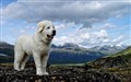Deva Mountain Puppy 2