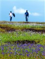 Kaas flower plateau