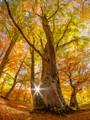 Tree and sunstar