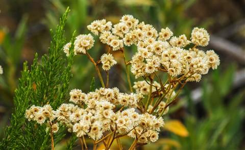 wildflower7893