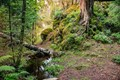 Karelian forest