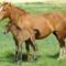 Horses - Dorset-004