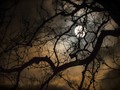 Tree Branches on a Cloudy Night